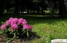 Park przymuzealny_9