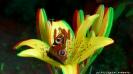 Zdjęcia w 3D_7